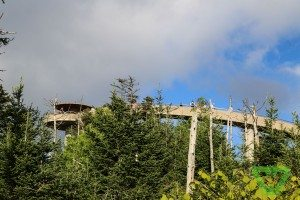 Clingmans Dome