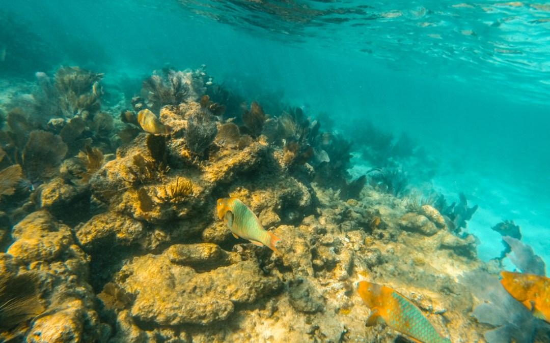 John Pennekamp Coral Reef Florida State Park