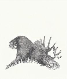 Hirvi (Elk)