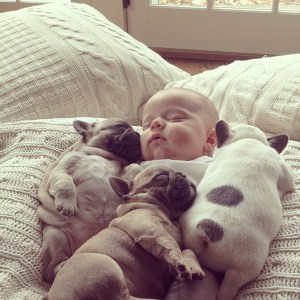 baby-covered-in-french-bulldog-puppies