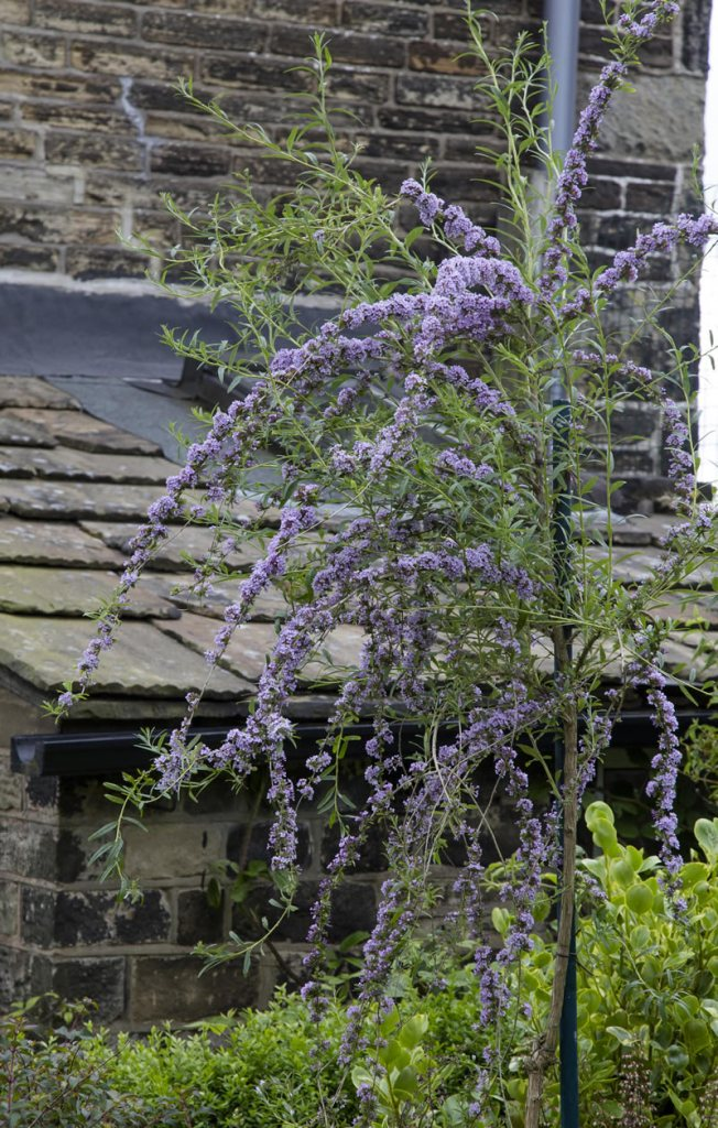 Baildon Methodist Church garden