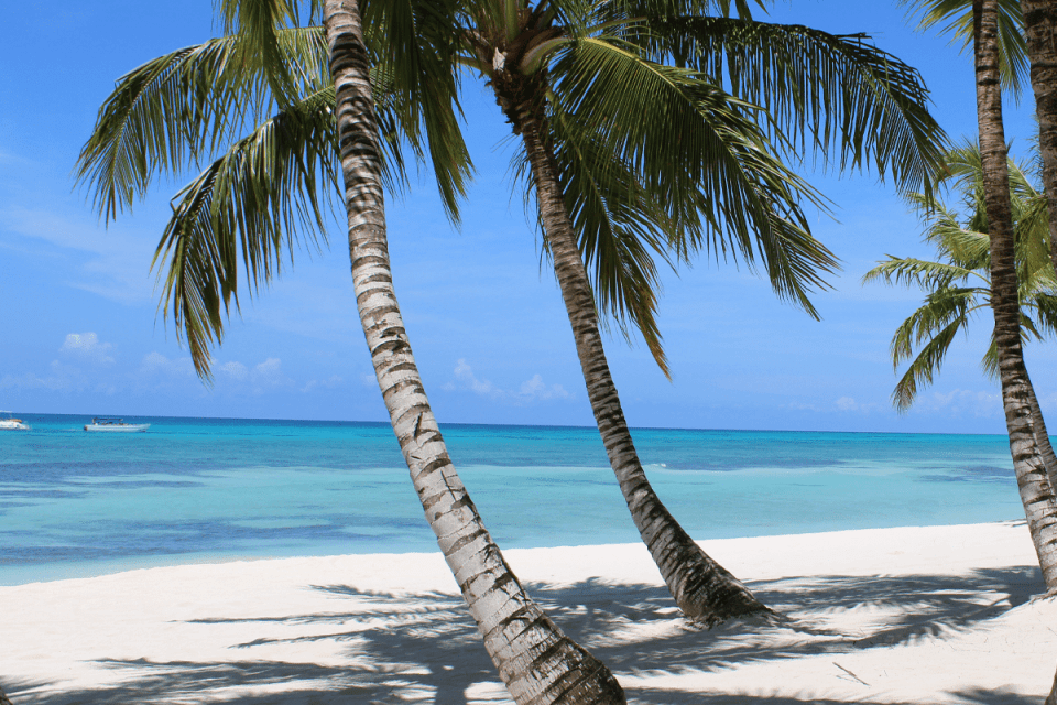 tropical beach view with palm trees leaning down to the crystal blue waters of the ocean, creating shadows on the white sand