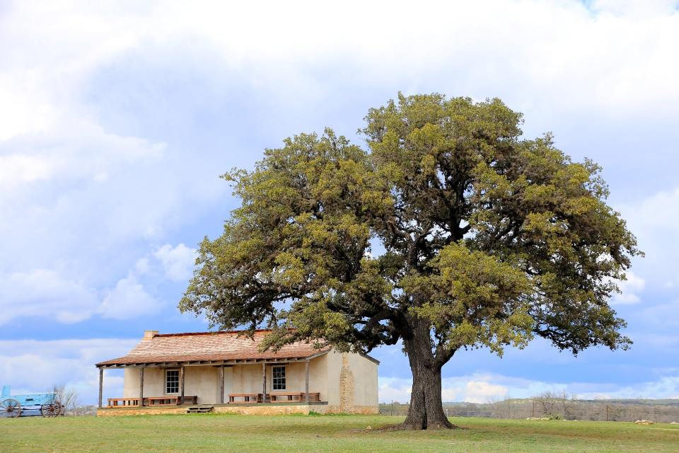 photo of historic ranch home in texas countryside under a large oak tree with blue skies