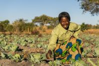 Water's role in boosting nutrition, health and food security