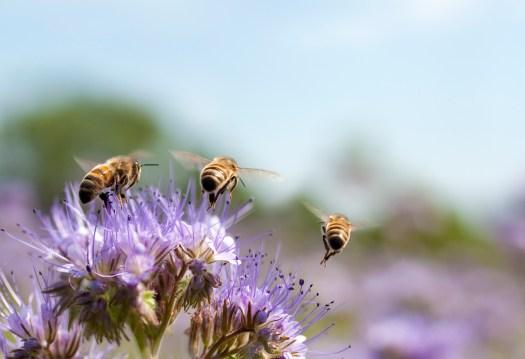 West Berkshire Honey