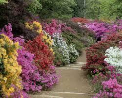 Winkworth Arboretum,  Godalming