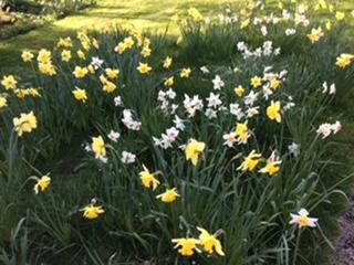 Farley Hill Gardens