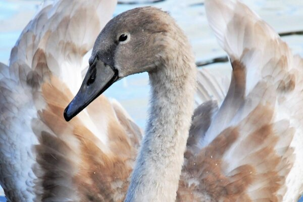 CRAFT-Photography-by-Canal-Swan-by-Donna-Lewis-copyright