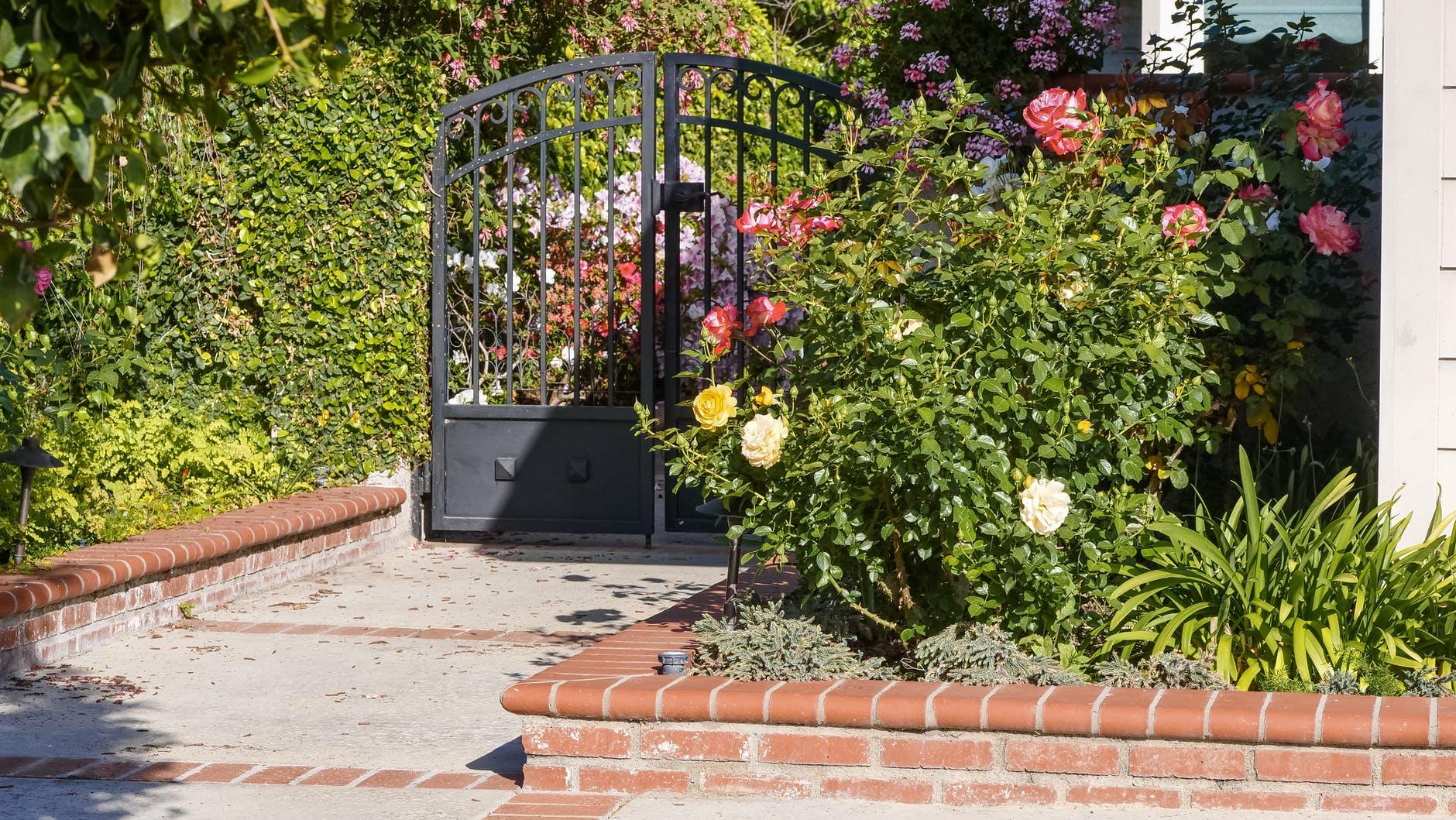 black metal gate near green plants