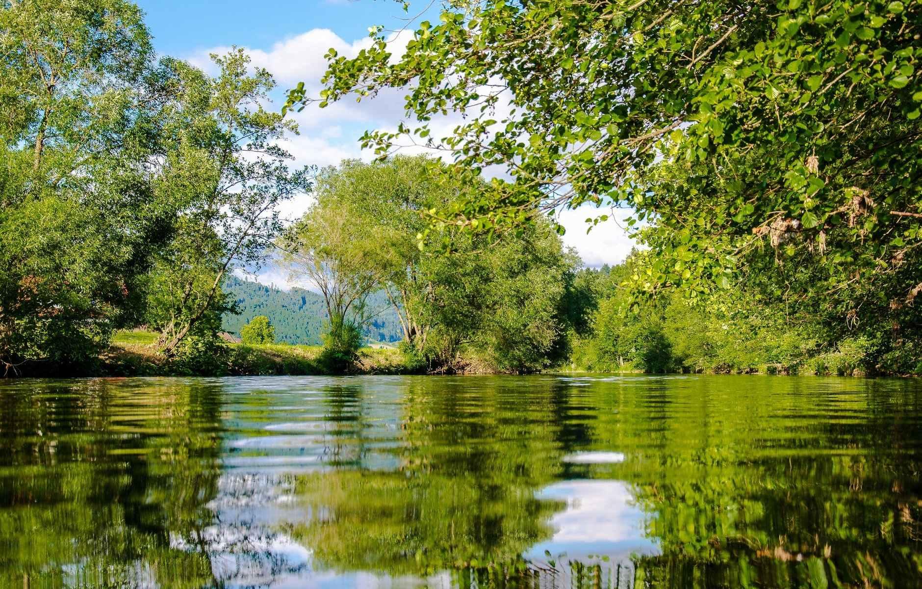 panoramic photo of bushes near pond