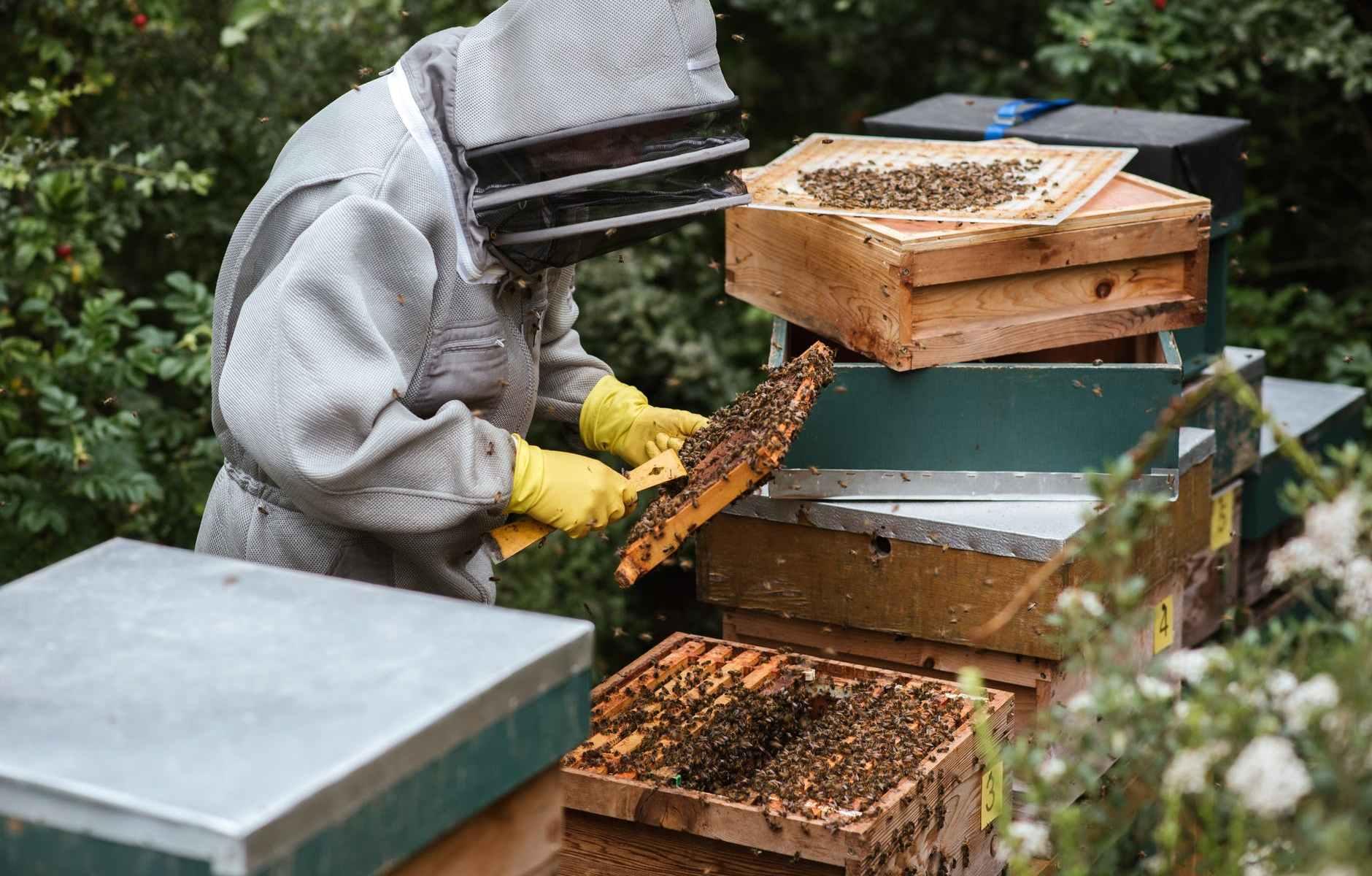 unrecognizable beekeeper harvesting honey in apiary