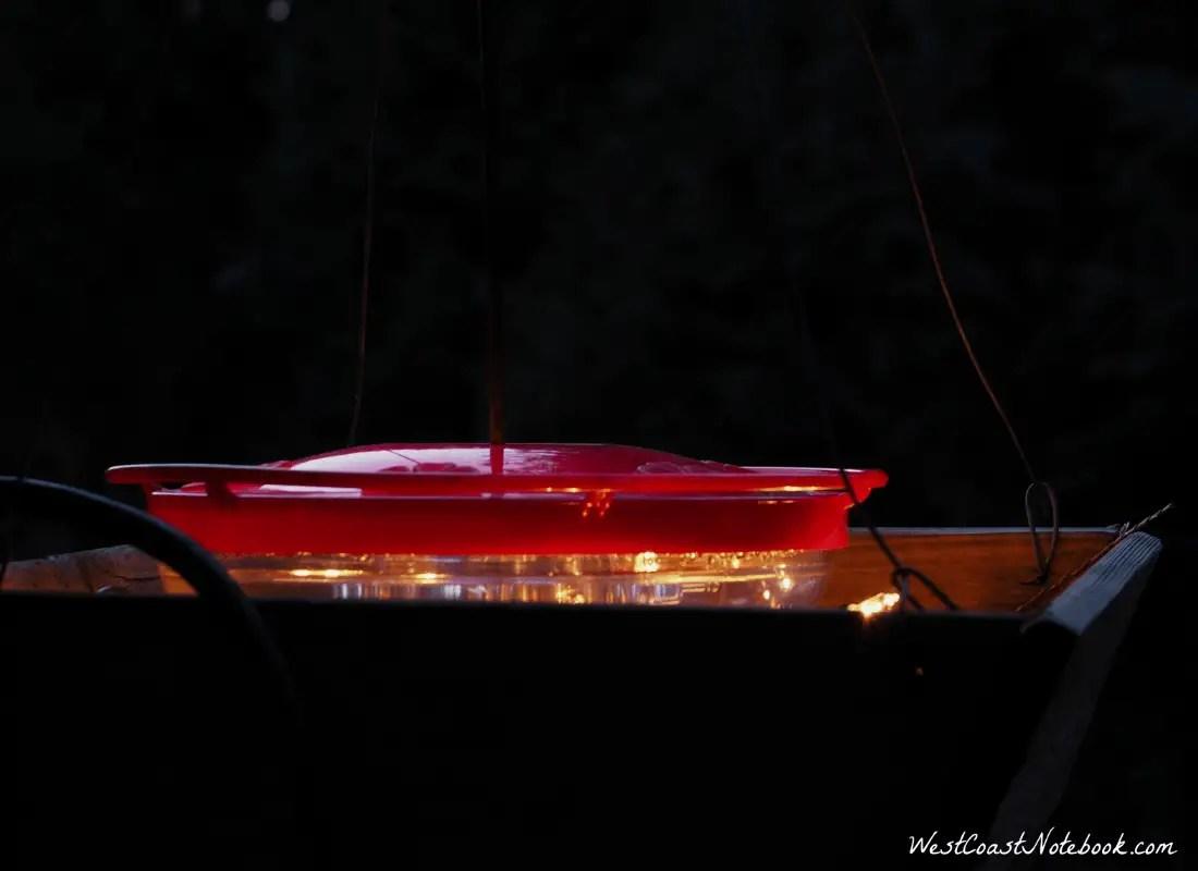 Hummingbird feeder at night