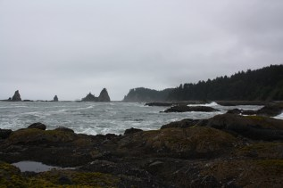 The intertidal environment of Sokol Point, in the Olympic National Park (ONP). Photo credit: Steven Fradkin; NPS