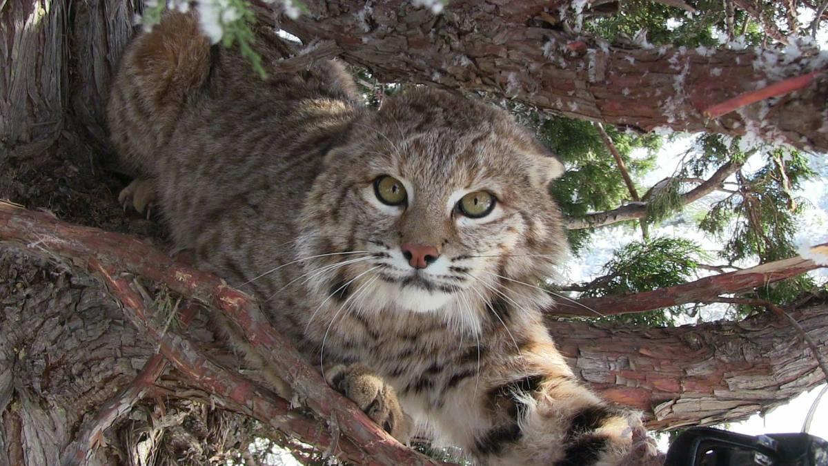 Videos | Western Cats Inc