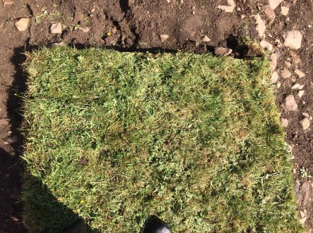 My portion of turf this morning