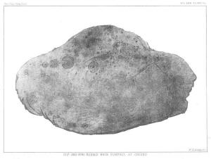 whitehill-01..1896.psas30