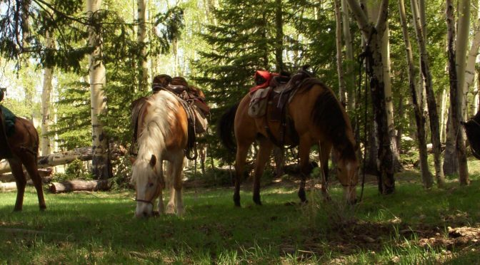 horse and mule trail guide