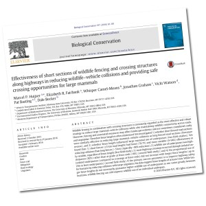 Effectiveness of short sections of wildlife fencing and crossing structures along highways in reducing wildlife–vehicle collisions and providing safe crossing opportunities for large mammals