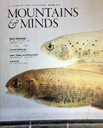 (Mountains and Minds photo: Montana State University) - Grayling fish on cover
