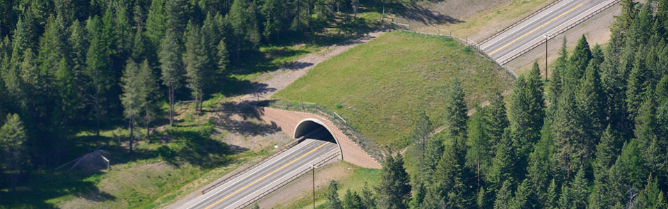 Aerial Image of Wildlife Overpass