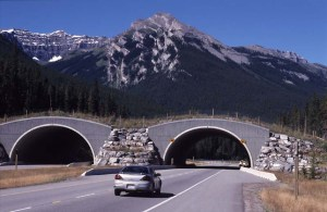 car on a rural highway approaching a wildlife overpass in mountainous region