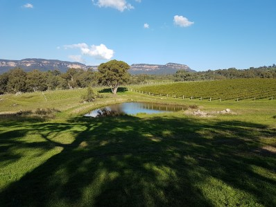 Megalong creek winery and vineyard