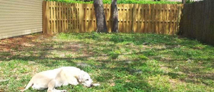 Countryway Pet Sitter