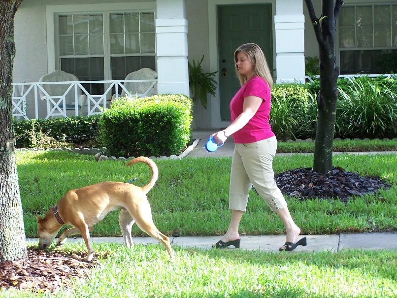 Westchase Dog Walker
