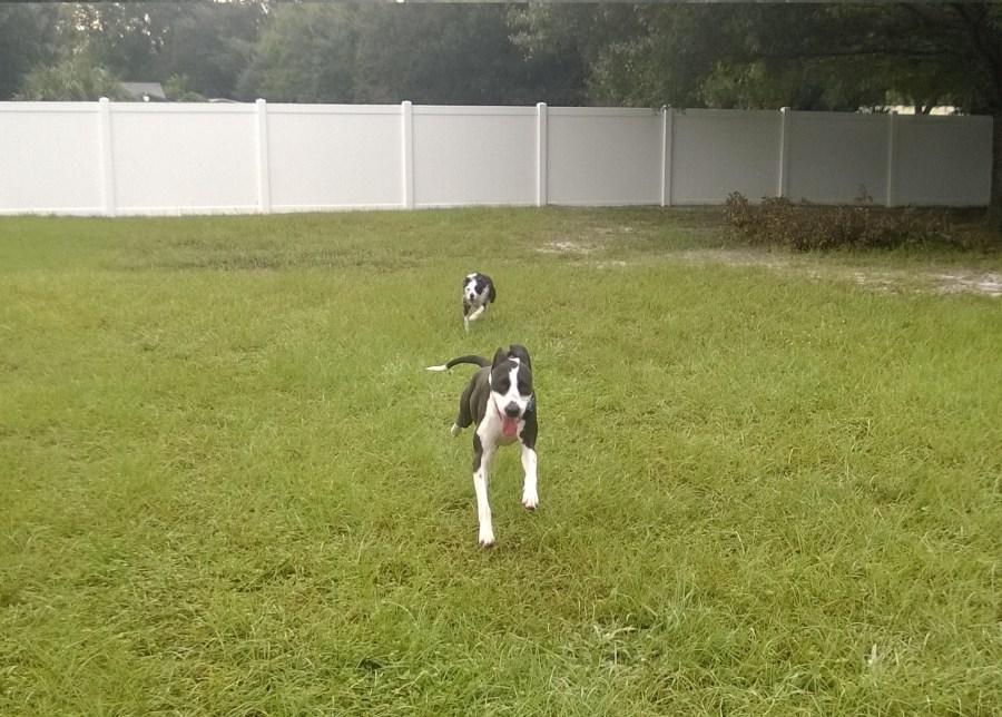 Natural Dog Day Care Tampa