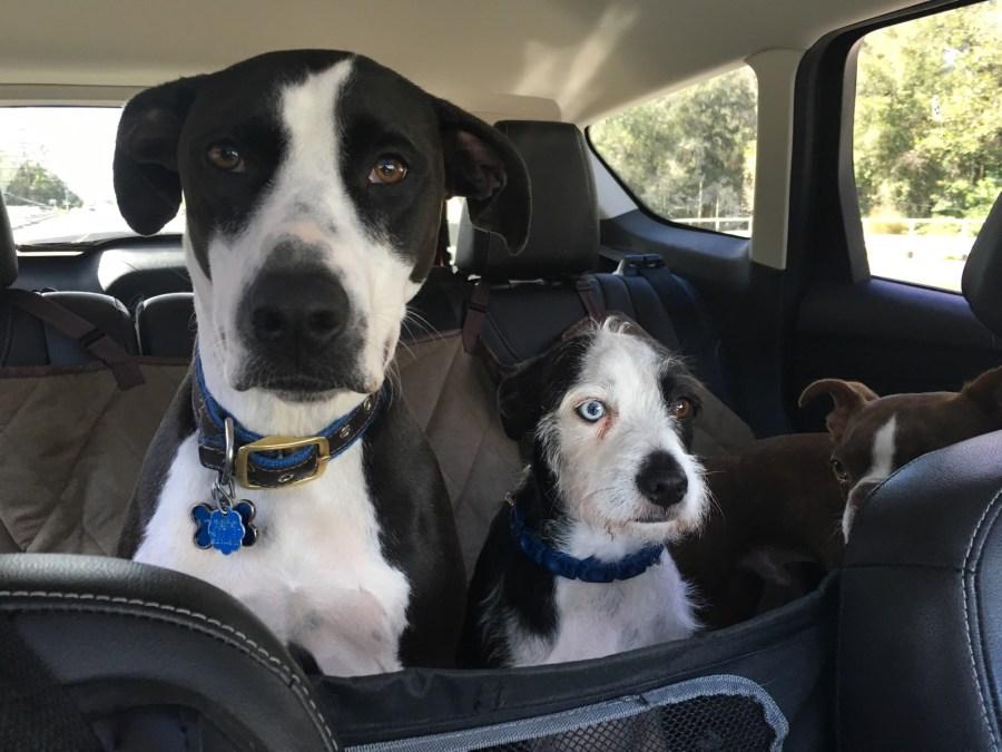 dog shuttle