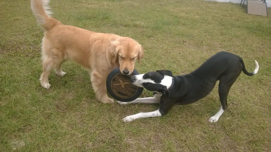 waterchase pet dog