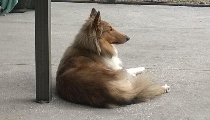 tampa dog boarding