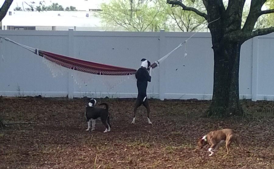 doggie daycare tampa