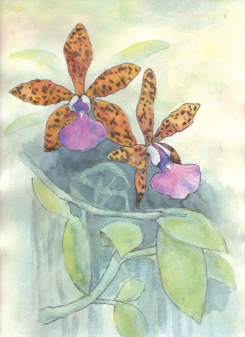 Orchid, Cattleya Peckhaviensis in watercolor
