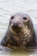 Things to do in Pembrokeshire - Seal watching