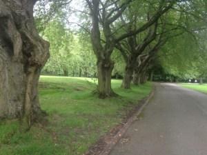 armley park 4