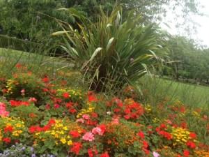 pudsey park flowers 2