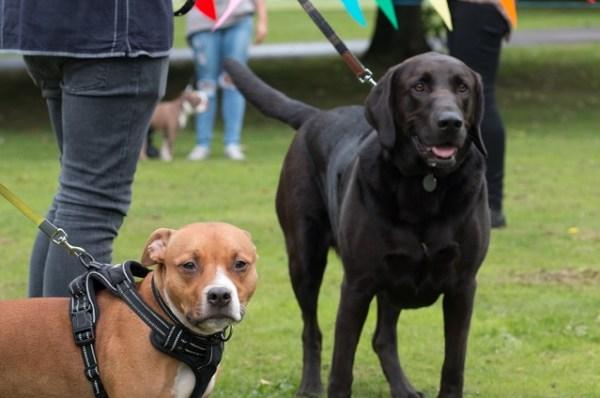 Armley park dogs show