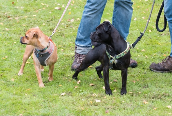 Armley park dogs