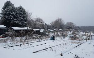 calverley allotments snow
