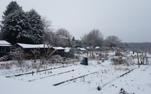 calverley allotments snow