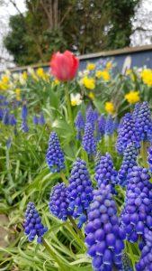 kirkstall in bloom spring 2