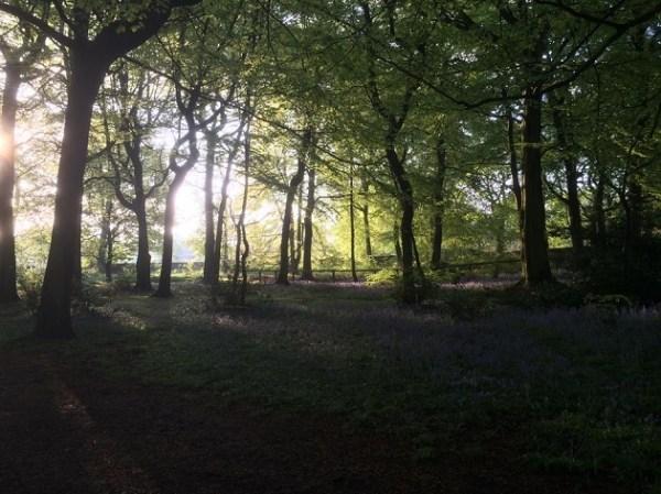 bluebells farnley park