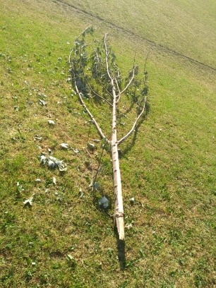 Rubbish left and trees damaged on West Leeds playing fields