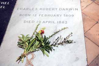 PICTURE PARTNERSHIP. (912182-) PICTURE BY : ANDREW DUNSMORE. To celebrate 200 years of the birth of Charles Robert Darwin, born 12th February 1809, a wreath of flowers was laid on his memorial at Westminster Abbey, London after Evensong.