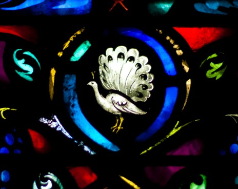 glass-peacock