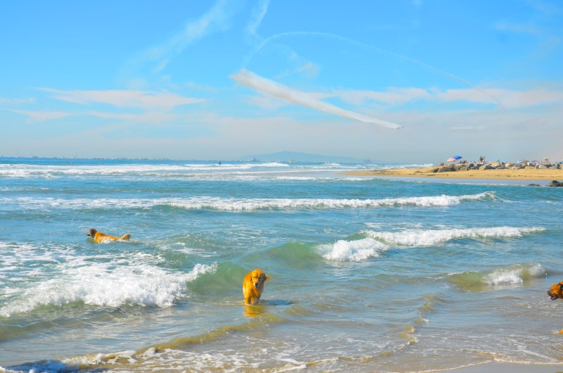 Newport Beach Dog Beach