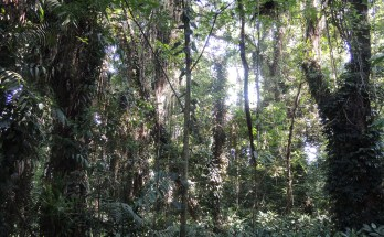 West Papua Forests, Precious Gems for West Papua, Indonesia and the World