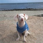 Special Tale: Veterinarian's Book Tells Story of Disabled, Pink Puppy