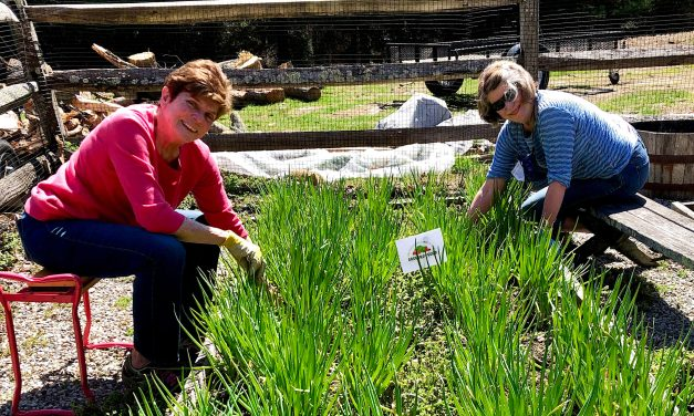 Greens Farms Gardeners Harvest Community Goodwill to Feed People in Need